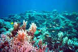 ケアンズの珊瑚礁